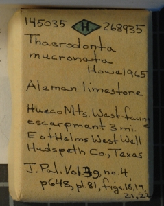 Example of a holotype specimen box from the Smithsonian Museum of Natural History.